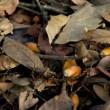公園に転がっていたどんぐりと落ち葉