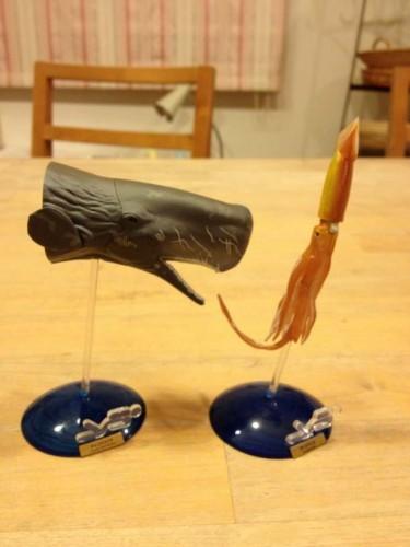 クジラとイカ