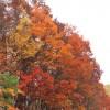 こ北海道の紅葉