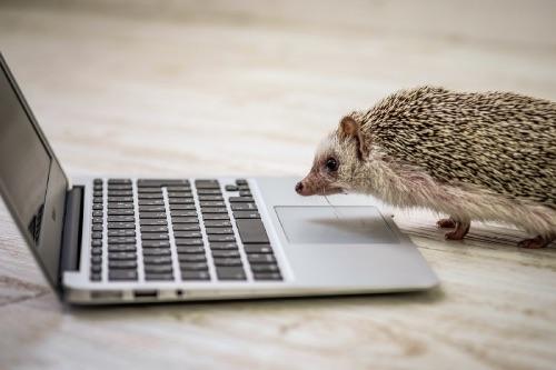 MacBookとハリネズミ